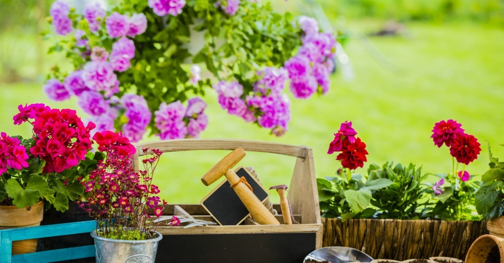 Jardinería.<br>Consejos de otoño