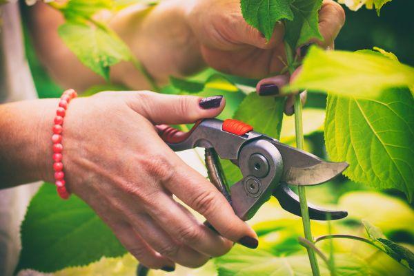Taller de jardinería: Tiempo de poda
