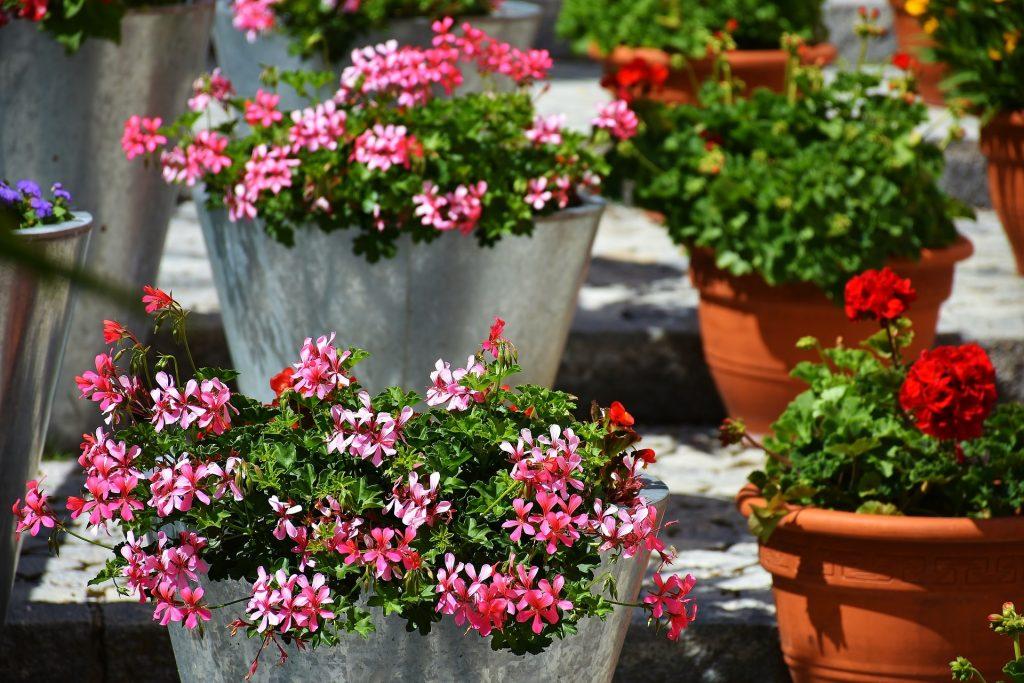 Taller de jardinería: Colores de primavera
